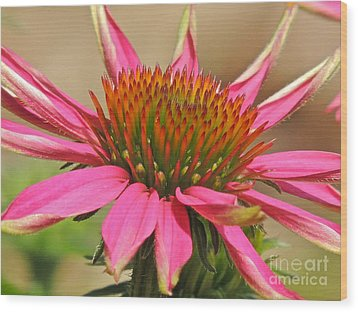 Wood Print featuring the photograph Starburst by Eve Spring