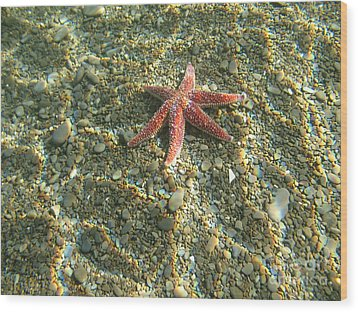 Starfish In Shallow Water Wood Print by Ted Kinsman