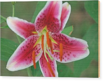 Stargazer Lilly Wood Print by Michele Carter