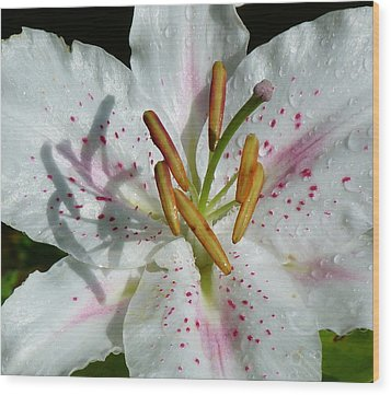 Wood Print featuring the photograph Stargazer Lily by Lynn Bolt