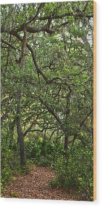 Starkey Woodlands  Wood Print by Gregory Colvin