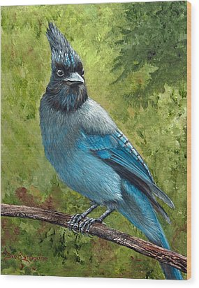 Stellar Jay Wood Print by Dee Carpenter