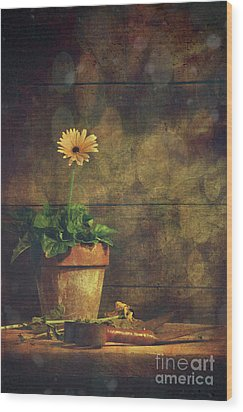 Still Life Of Yellow Gerbera Daisy In Clay Pot Wood Print by Sandra Cunningham