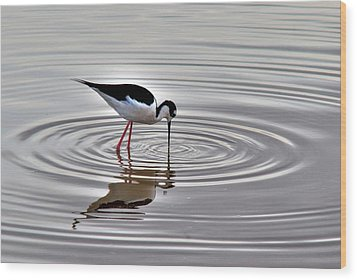 Wood Print featuring the photograph Black-necked Stilt by Tam Ryan