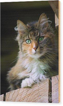 Stinks Barn Cat Wood Print by Lila Fisher-Wenzel