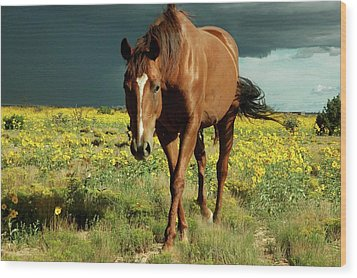 Storm Horse Wood Print by photo © Jennifer Esperanza