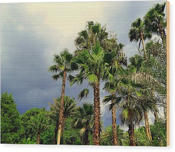 Stormy Skies And Palms Wood Print by Sheri McLeroy