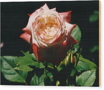 Strawberry Rose Wood Print