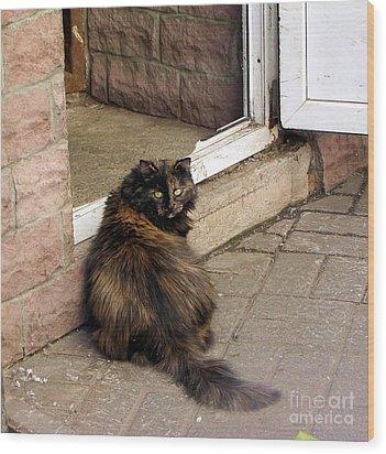 Street Cat Wood Print by Yury Bashkin