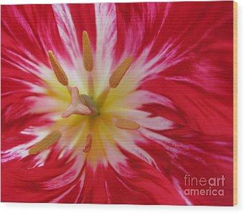 Striped Flaming Tulips. Hot Pink Rio Carnival Wood Print by Ausra Huntington nee Paulauskaite