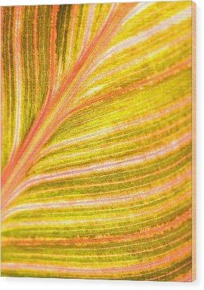 Striped Leaf Wood Print by Bonnie Bruno