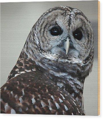 Striped Owl Wood Print by LeeAnn McLaneGoetz McLaneGoetzStudioLLCcom