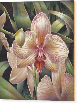 Striped Peach Orchid Wood Print