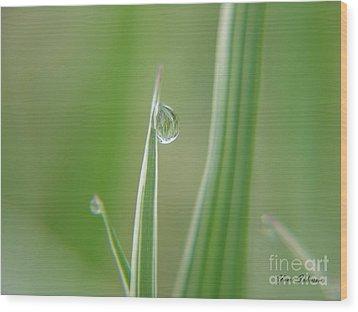 Striped Raindrops Wood Print by Yumi Johnson