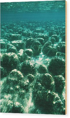 Stromatolites Wood Print by Peter Scoones