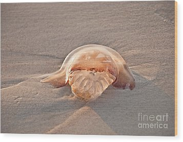 Stromolophus Jellyfish Wood Print