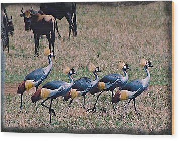 Strutting Crested Cranes Wood Print