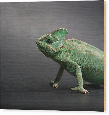Studio Shot Of Chameleon Wood Print by Sarune Zurba