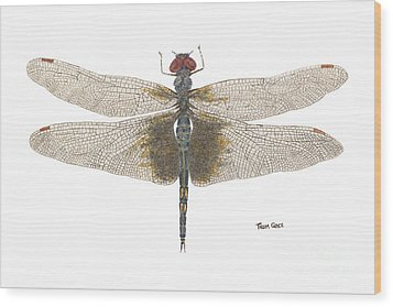 Wood Print featuring the painting Study Of A Female Black Saddlebags by Thom Glace