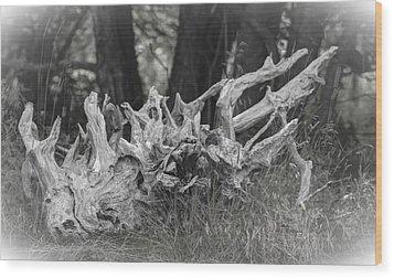 Stumped Wood Print by Daniel Milligan