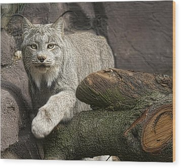 Wood Print featuring the photograph Stunning by Cheri McEachin