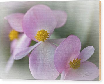 Subtle Blush Wood Print by Barbara  White