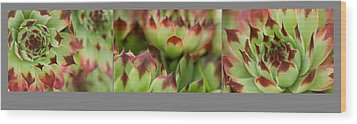 Wood Print featuring the photograph Succulent by Trevor Chriss