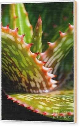Succulents With Spines Wood Print by Judi Bagwell