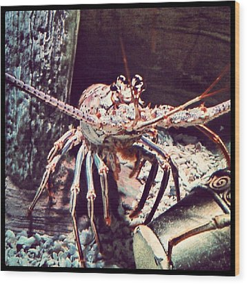 Suddenly, I Want Seafood.... #lobster Wood Print by Kel Hill