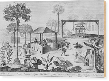 Sugar Production In The West Indies Wood Print by Everett