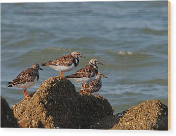 Sullivan's Island Shore Birds Wood Print by Melissa Wyatt