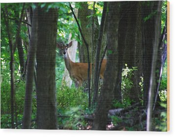 Summer Buck 1 Wood Print by Scott Hovind