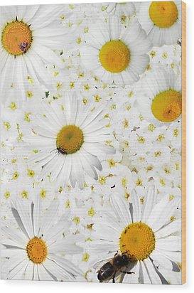 Wood Print featuring the photograph Summer Collage With Camomiles And Insects by Aleksandr Volkov
