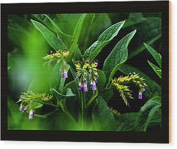 Wood Print featuring the photograph Summer Comfrey Blooms by Susanne Still