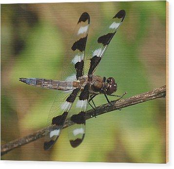 Summer Dragonfly Wood Print