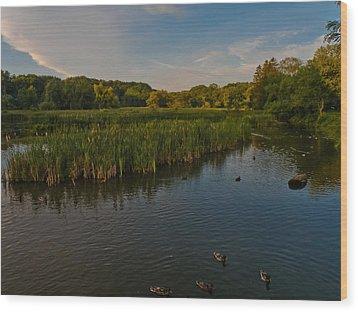 Summer Duck Pond Wood Print by Jiayin Ma
