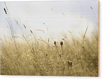Wood Print featuring the photograph Summer Field by Emanuel Tanjala