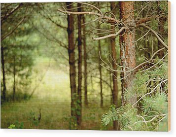 Summer Forest. Pine Trees Wood Print by Jenny Rainbow