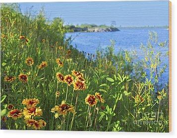 Summer In Toronto Park Wood Print by Elena Elisseeva