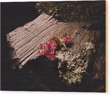 Summer Kisses Wood Print by Jessica Brawley