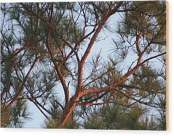 Summer Pine Wood Print by Rusty Voss