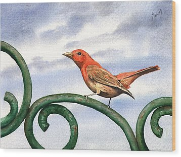 Summer Tanager Wood Print by Sam Sidders