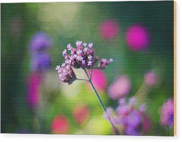 Summer Verbena Wood Print by Amy Tyler