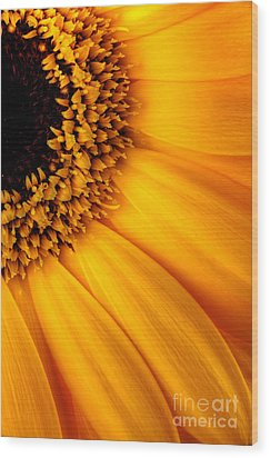 Sun Burst - Sunflower Wood Print by Martin Williams