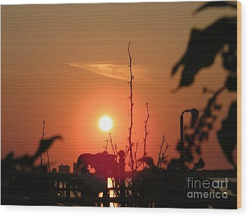 Sun Down Wood Print by Laurence Oliver