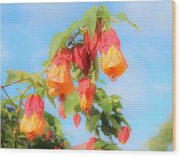 Sun Drenched Bell Flower Wood Print