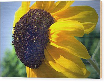 Sun Flower Wood Print by Cheryl Cencich