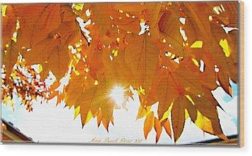 Sun Kissed  Deciduous Wood Print by Danielle  Parent