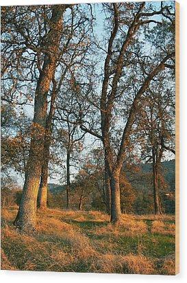 Sun Kissed Oaks Wood Print by Pamela Patch
