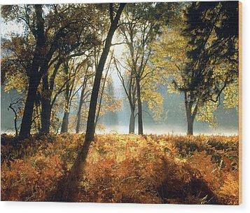 Sun Rays Passing Through Golden Trees  Wood Print by ilendra Vyas